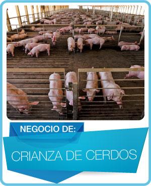 programas crianza de cerdos