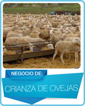 programas crianza de ovejas