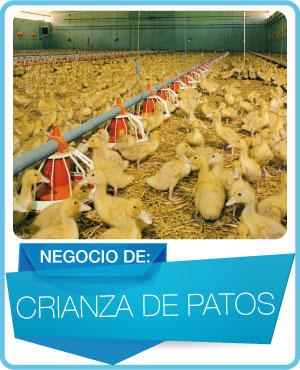 programas crianza de patos