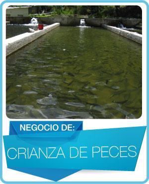 programas crianza de peces