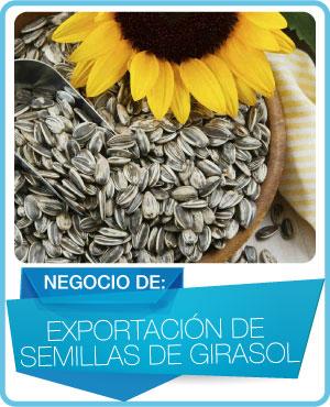 programas exportacion de semillas de girasol