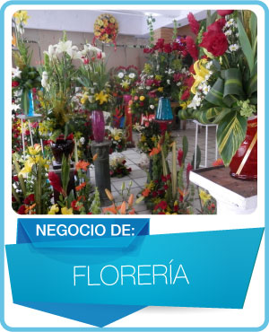programas floreria