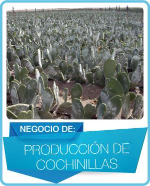 programas produccion cochinilla