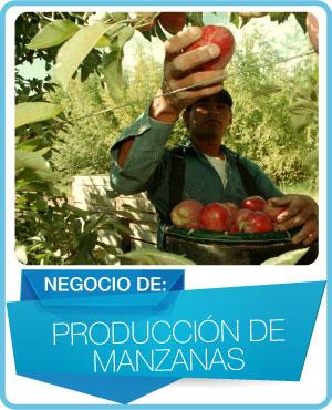 programas produccion de manzanas