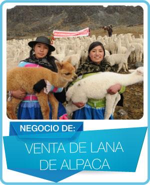 programas venta de lana de alpaca